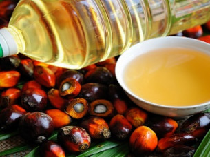 Palm Oil Competitive Price..
