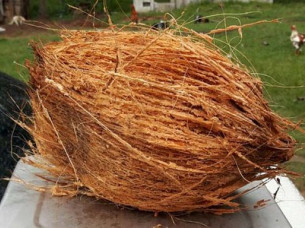 Fully Husked Fresh Coconut For Export..