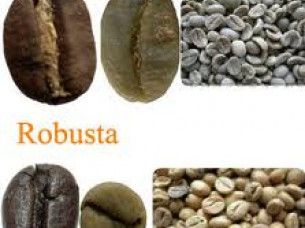 Coffee Beans in Bulk Packaging..