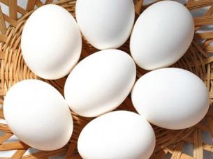 Best White Chicken Eggs for Export..