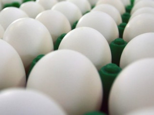 Best Farm Fresh Export Quality Eggs..