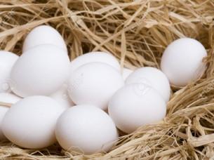 Indian White Shell Eggs Supplier..