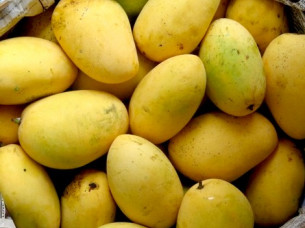 Fresh Chaunsa Mango Wholesale..