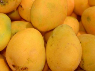 Fresh Chaunsa Mango Supplier..