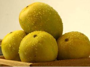 Fresh Indian Mangoes Langra/Dashehri/Alphonso Mangoes..