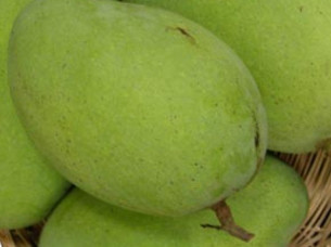 Fresh Mangoes Exporter from India..