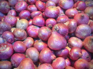 Fresh Red Onion From India..