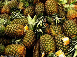 Fresh Pineapple Export Best Quality..