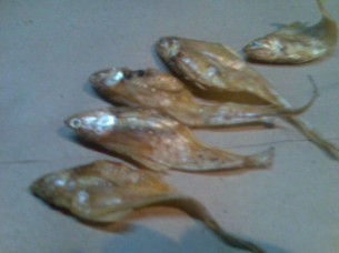 Dried Golden Anchovies..