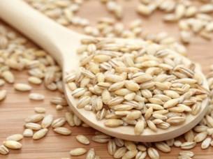 Feed Barley For Sale..
