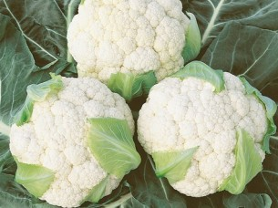 Hybrid Cauliflower Seed..
