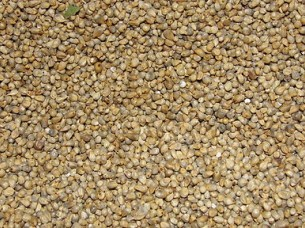 High Quality Millet for Sale..