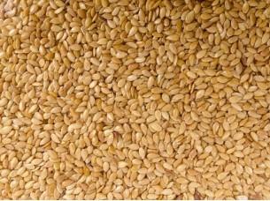 Best Grade of Sesame Seeds..