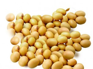 Dried Yellow Soybeans..