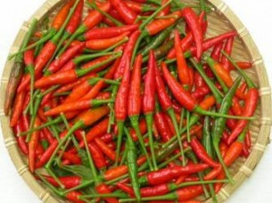 Quality Dried Red Chilli..