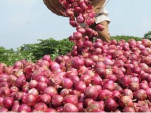Exporter Of Onion From India..