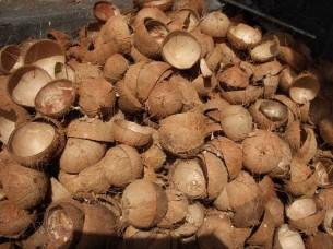 Raw Coconut Shell..