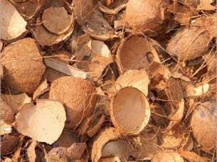 Coconut Shell Half..