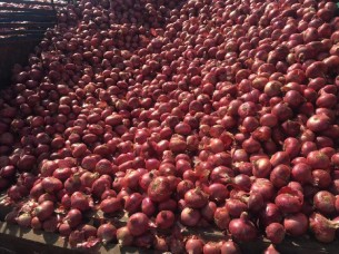 Wholesale Price Fresh Red Onion From India..
